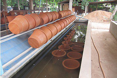 clay pots lined up